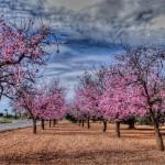 Saludos Primaverales